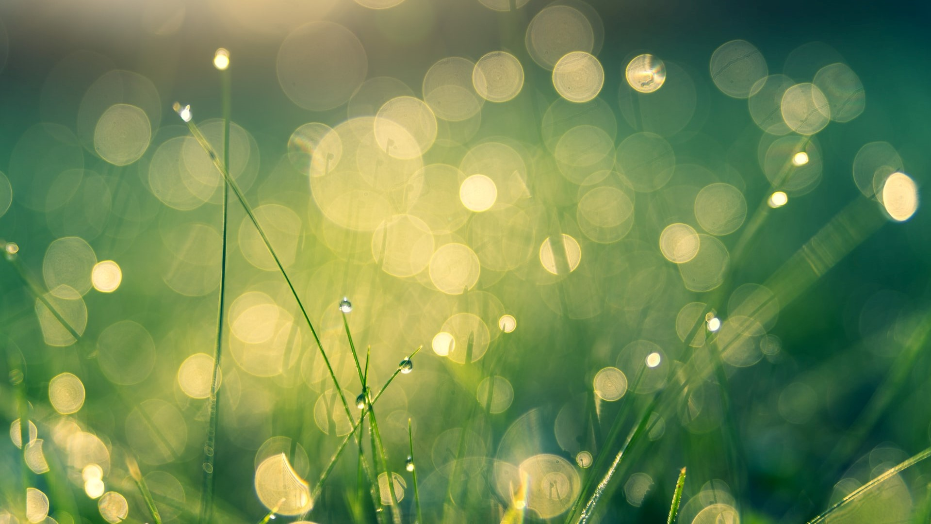 Why My Firm Is Going Green