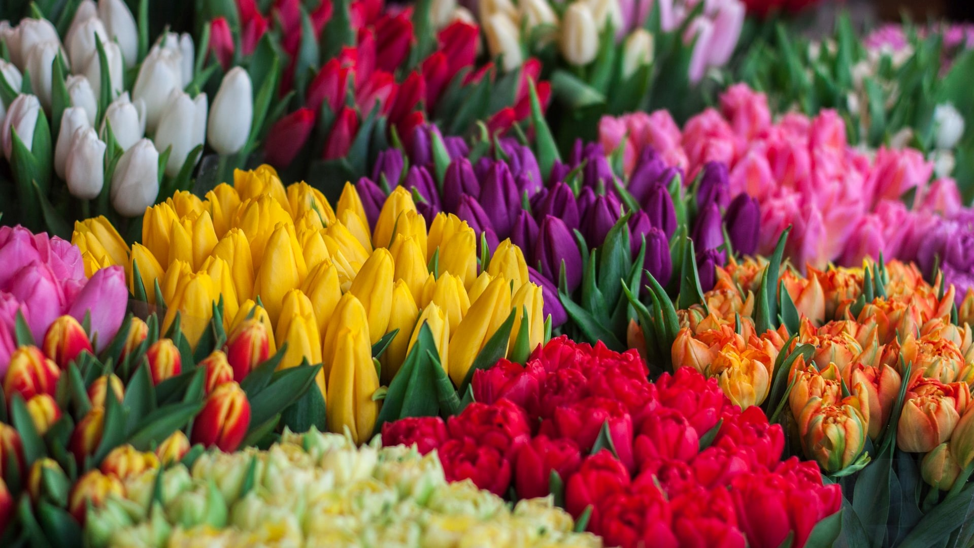 200 Million Flowers Update