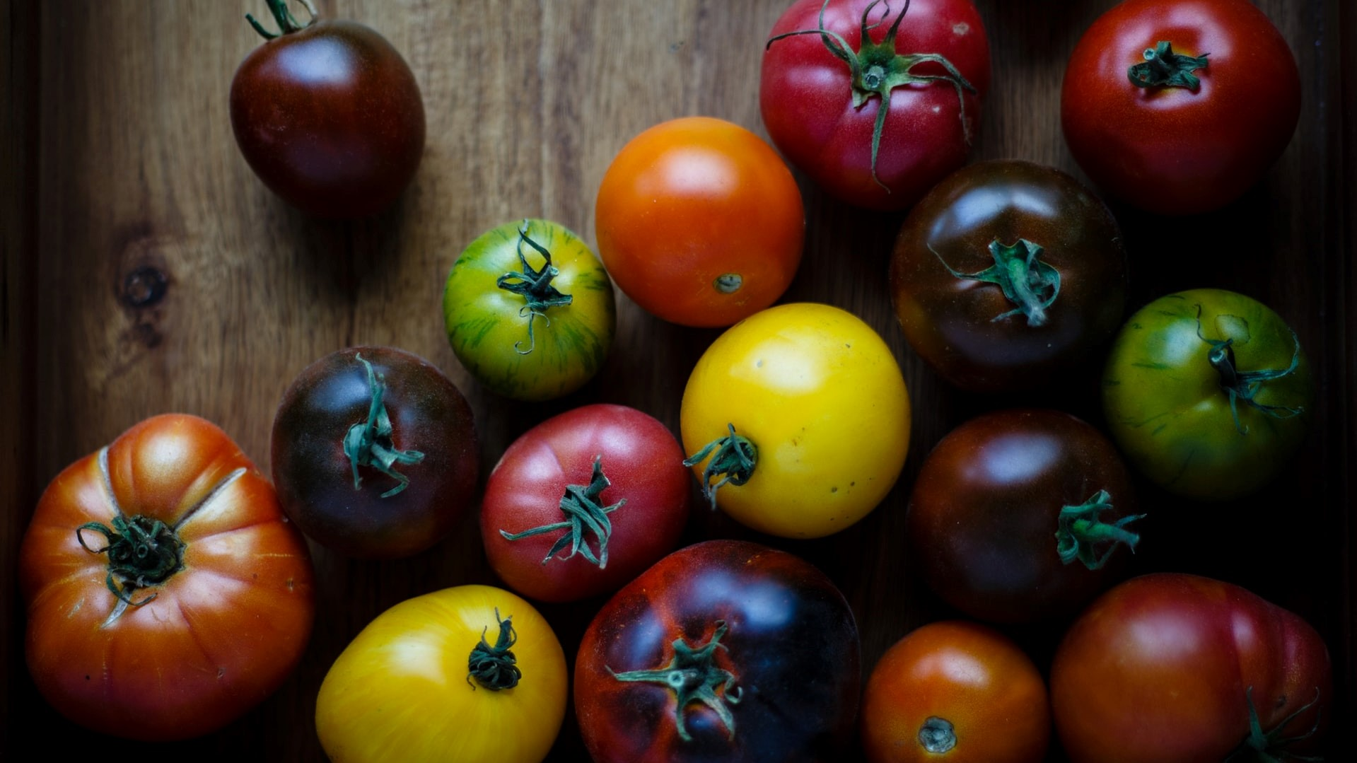Dr. Mike and His Heirloom Tomatoes
